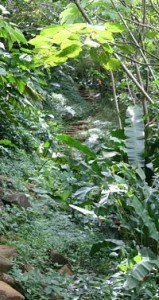 seven-sisters-waterfalls-grenada-path-159x300