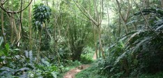 Walking and Hiking in Grenada