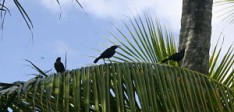 3 Top Caribbean Bird Watching Spots in Grenada