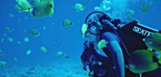 What Every Diver Should Know About Diving in Grenada