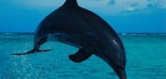 Sea Life in Grenada – Turtles, Whales and Dolphins
