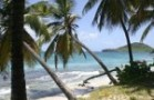 sandyisland_palm_trees