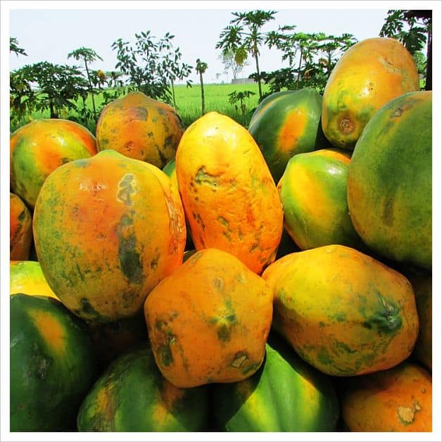 reasons for eating papaya