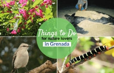10 Things to Do in Grenada : Nature Lovers Edition